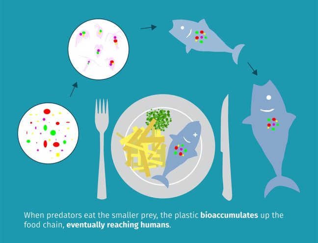 plastic food chain